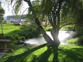 Picture of  Retention Pond and Tree by the Linden Tree outfall to the Columbia River